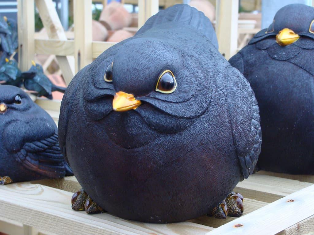 Gros oiseau noir CC Flickr Ben Sutherland